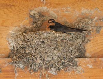 Examine a Nest to Identify Birds