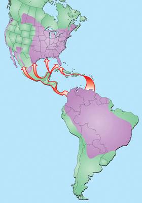 Purple America Map.Purple Martin Migration Routes