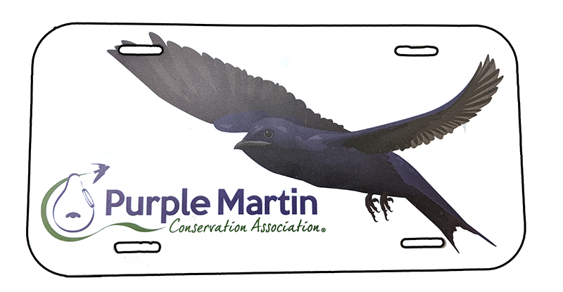 Purple Martin Custom License Plate