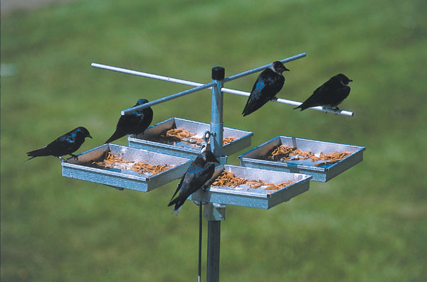 Bed & Breakfast Feeder