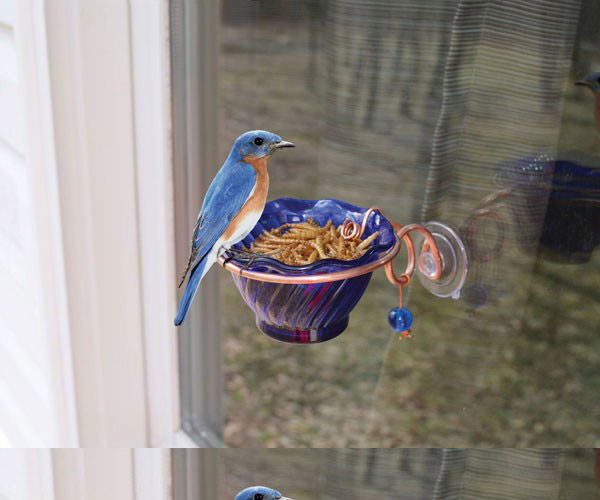Feeder - Copper Bluebird Mealworm Window Feeder